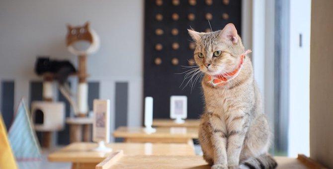 川崎の猫カフェおすすめ3選!駅チカの便利なお店を紹介