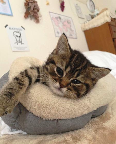 甘えん坊な猫がする行動や仕草5つ