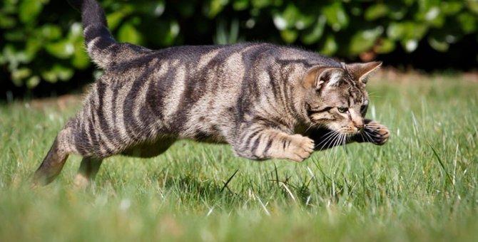 猫が蚊に刺される危険性と対策出来る事
