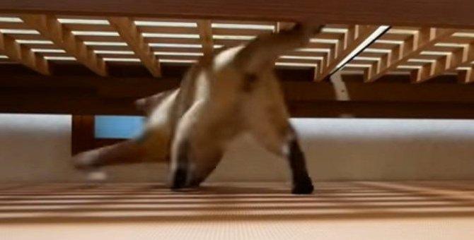 新しい人間用ベッドが来たー!猫ちゃんも下に潜って大はしゃぎ!