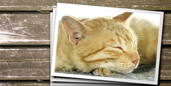 干支に猫が選ばれなかった知られざる理由