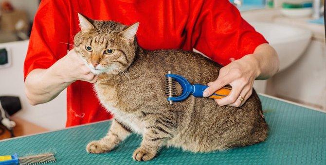 猫と触れ合えるバイト5選!資格がいるもの不要な物