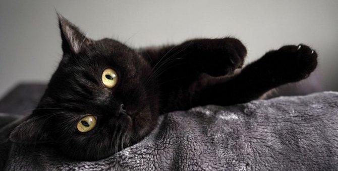 猫に絶対させてはいけない『遊び方』2つ