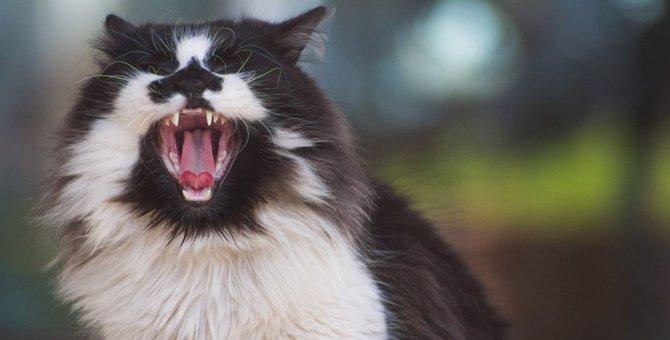猫が人から敵意を感じたときの行動6つ