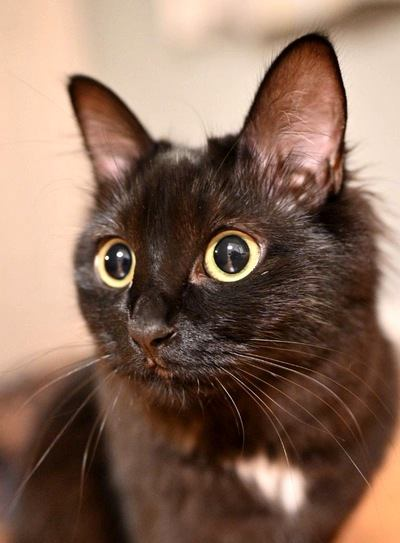 キュートで優雅でオシャレで天使!黒猫の魅力5選