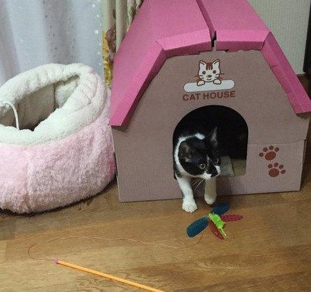 保護猫をお迎えしたら?無理なくお家に慣らす6つの方法