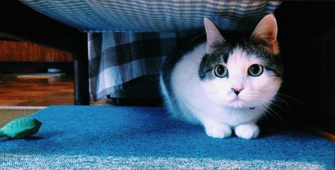 猫に落ち着きがない!原因や対処法や考えられる病気