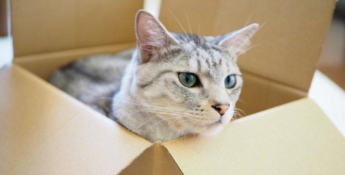 猫が『自分の家』を認知する方法5選