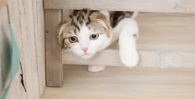 猫の筋力が低下する5つの理由やリハビリの方法