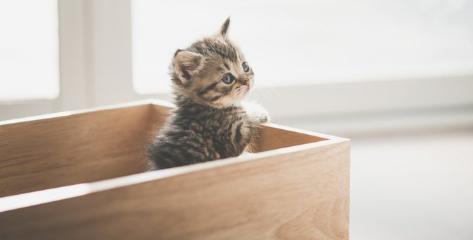 猫がお留守番を察する飼い主の行動6つ