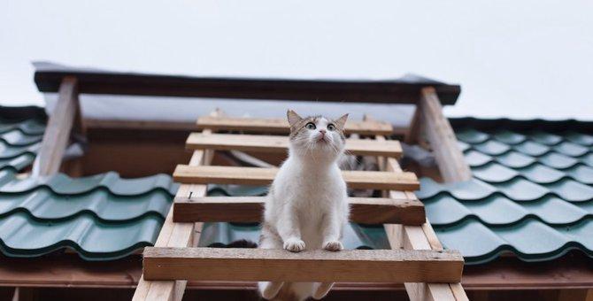 猫はしごのおすすめ3選、はしごつきのキャットタワーも紹介