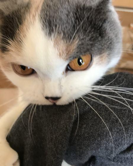 反抗期の猫にはどう接する?6つの対処法