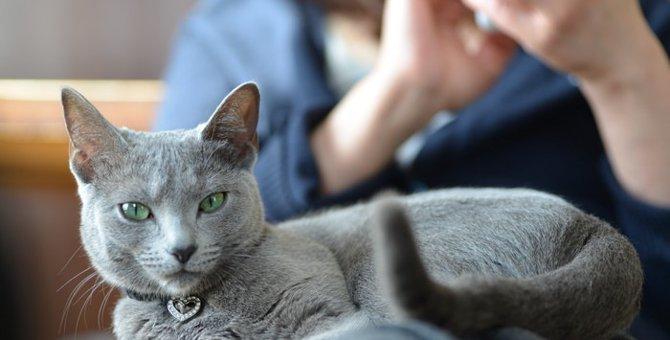 猫がよく鳴く理由と対処方法