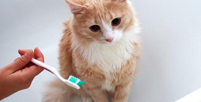 猫の歯石を除去するデンタルケアと予防法について