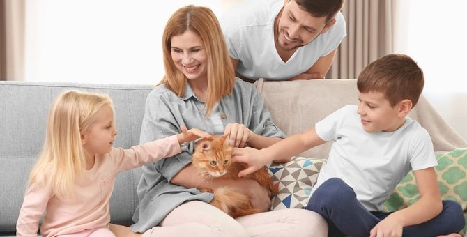猫との暮らしで良いことや大変なことは?快適に生活するための部屋作りも