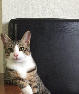 なぜ猫は『飼い主の帰宅時間』を予知できるの?