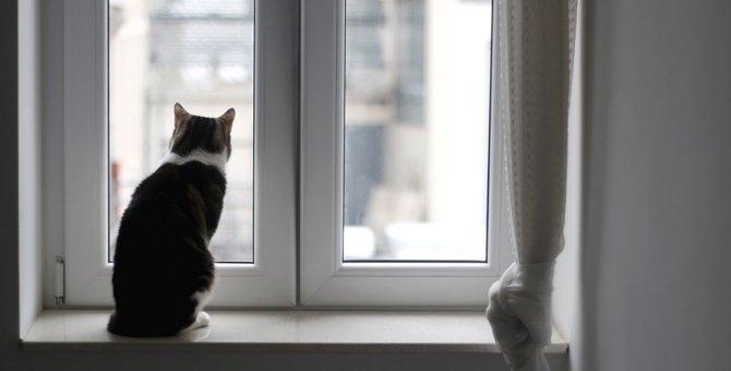 猫飼いさん注意!換気の為に窓を開ける時のリスク3つ
