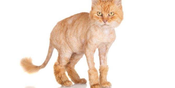 猫のサマーカットについて