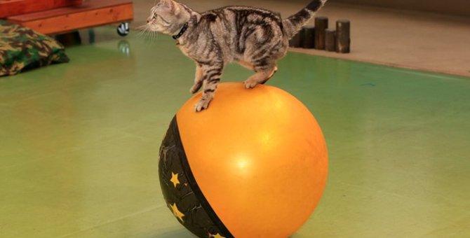 猫のテーマパーク4選と行き方・イベント