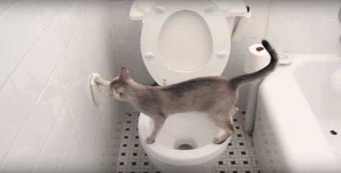 お見事!上手に水洗便器で用をたす猫ちゃん