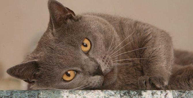 大理石で猫の暑さ対策ができる!おすすめの商品3選