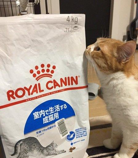 毛玉を吐いたり、咳き込んでしまう猫ちゃんにオススメ!ロイヤルカナン・インドア
