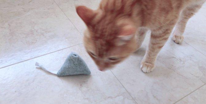 愛猫のために鈴の音が鳴り響く「鈴テトラ」を作ってみました!