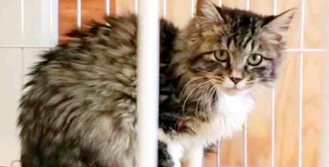 厳冬に保護された子猫…警戒が解けない猫への接し方とは?