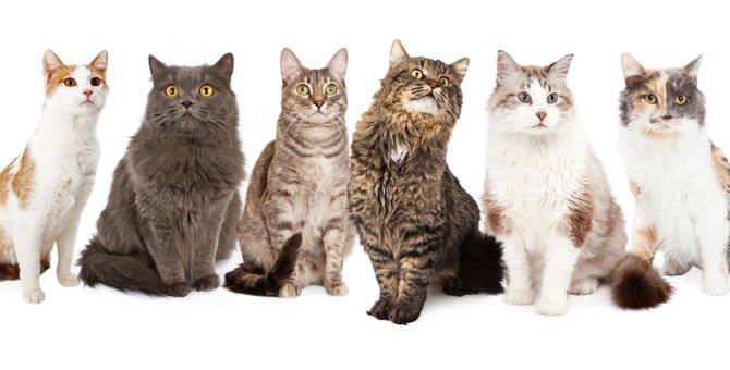 猫の模様と呼び名。24種類の被毛をご紹介