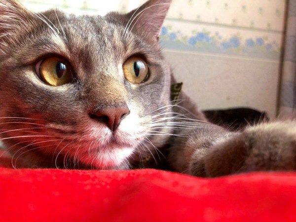 怒らないで!イタズラと誤解されがちな猫の行動4つ