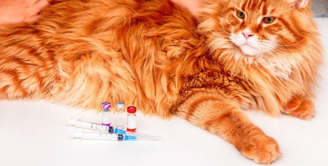 知らないと怖い!猫の寿命を縮める『悪質なウイルス』6つと予防策