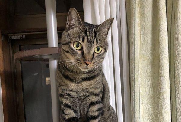 猫に付けるべき『名前の条件』3選!どんな名前を付けるのがベストなの?