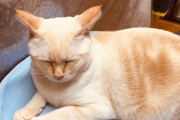 猫が『ちょっとウザいな...』と思っている時の仕草4つ