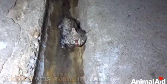排水路で瀕死の子猫を救助。お願い、間に合って…