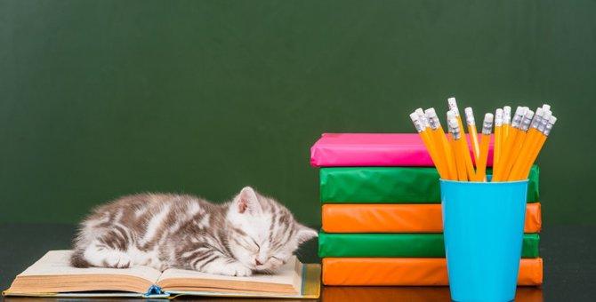 猫の文房具おすすめ13選!かわいくて便利!