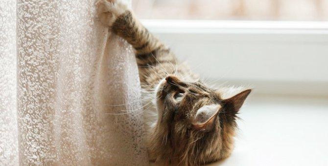猫の爪に怪我をさせてしまうかも…危険な8つの場所