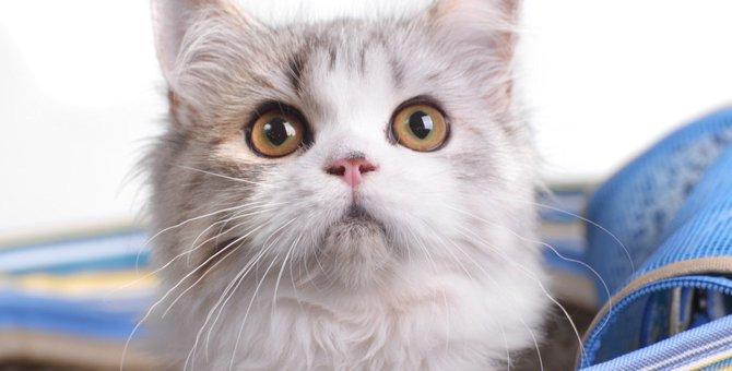 猫のキャリーバッグのおすすめ商品とタイプ別の選び方