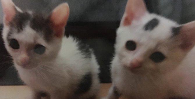 子猫のお世話は大変だ!ある日突然猫ママになった私の奮闘記