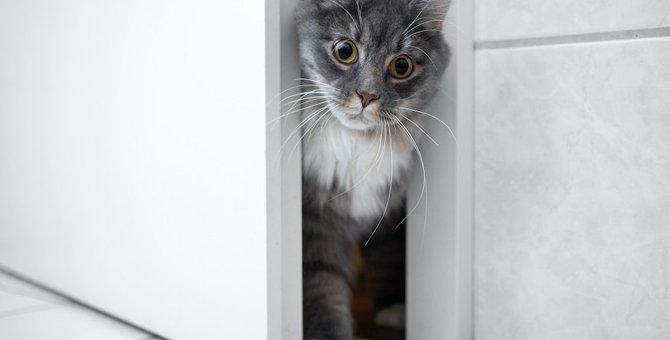 猫が禁止している部屋に『わざと入る』理由3つ