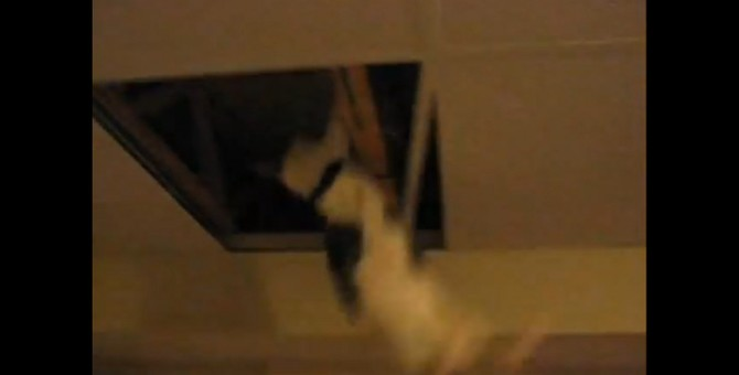 天井裏から…忍者猫!?登場した瞬間笑いに包まれる