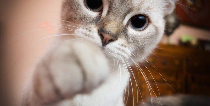 猫が飼い主を心配している時にする8つの仕草