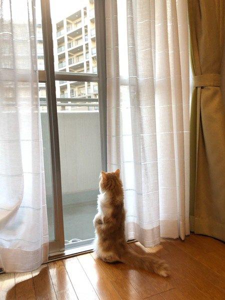 マンション猫と一軒家猫、生活や性格に違いは出る?