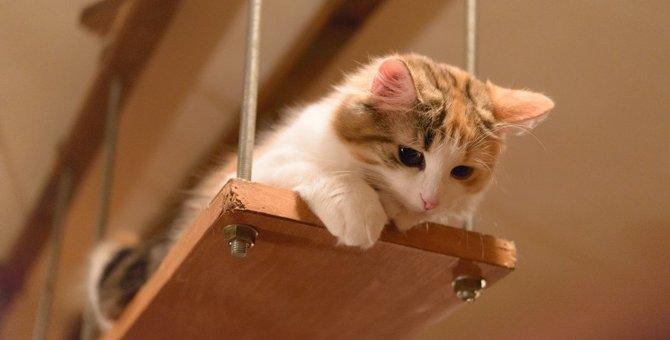 猫が『見下ろしている』ときに考えていること3つ