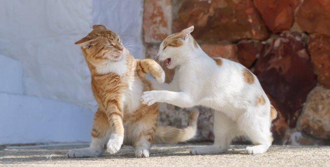 猫が『八つ当たり』をする理由5つ