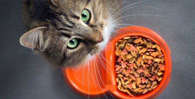 猫のごはんの与え方の子猫からシニア期における変化
