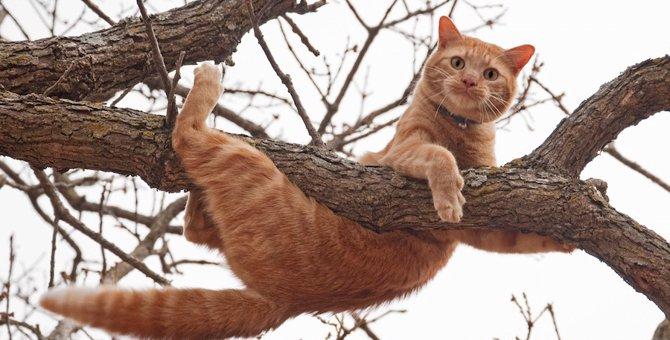 どんくさくて可愛い♡猫あるある6選