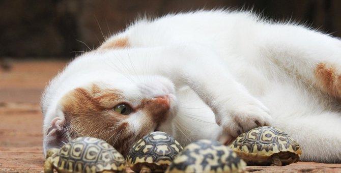 猫と亀を一緒に飼う時の注意点や方法