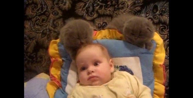 赤ちゃん相手にお姉さんぶる子猫ちゃんが可愛い!