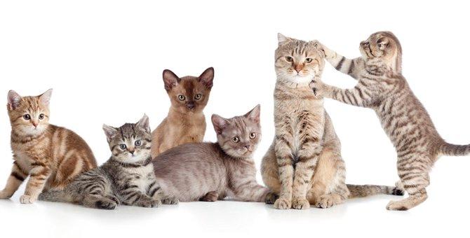 小型の猫の様々な種類とその平均サイズ