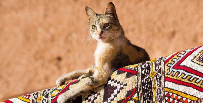猫を盾にされ古代エジプト人が敗北!ペルシャ兵のとった戦略とは